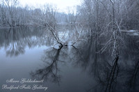 Reflection on Bare Trees
